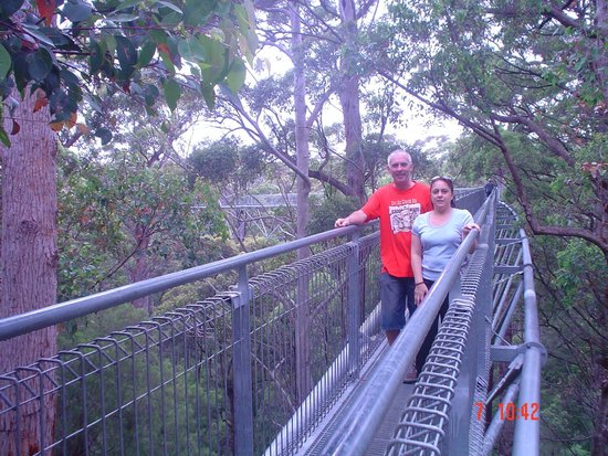 Tree Top Walk: The highest point