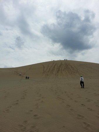 Tottori Sand Dunes : 広いです