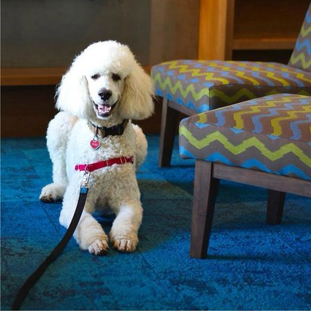 Accent Inn Victoria: Hey, I am Teddy (Doctor Theodore) and I LOVED the look and style of the New Lobby Furniture