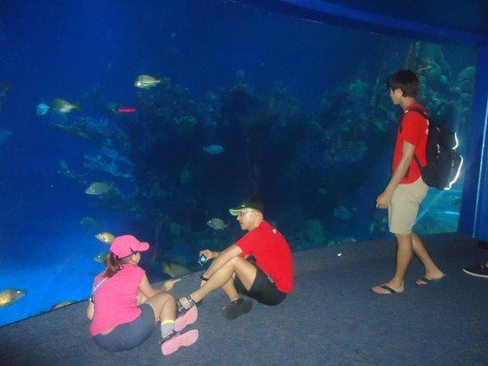 Epcot: The Seas with Nemo...