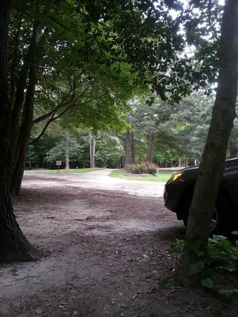 Holly Lake Campsites : View from my picnic table