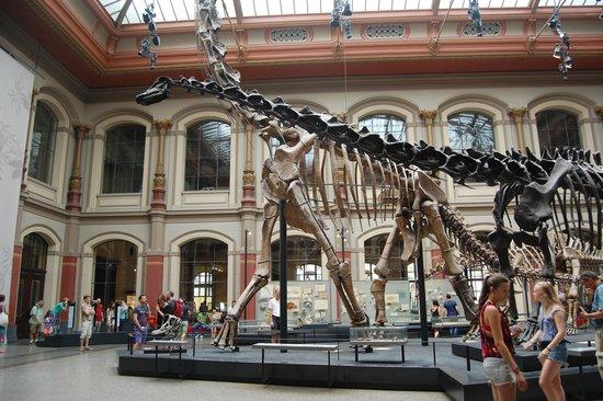 Museum fur Naturkunde (Natural History Museum) : Dinosaur Exhibition