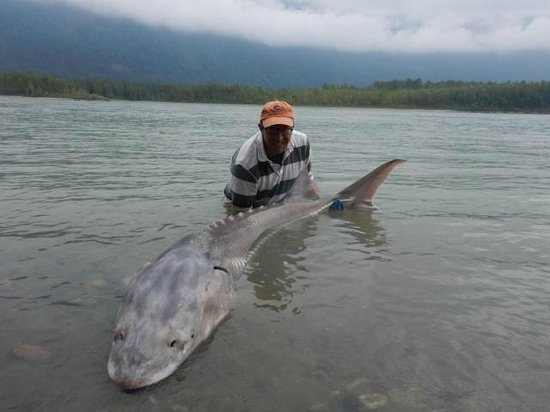 Fraser River Lodge: 7 foot sturgeon