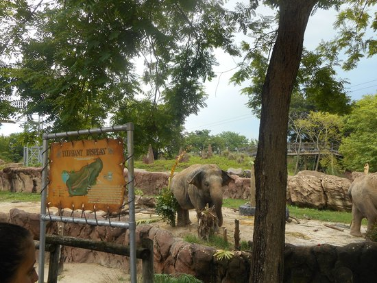 Jardines Busch: Elephant obstacle course