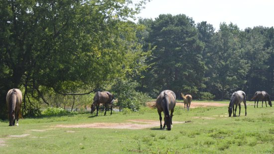 Southern Cross Ranch : Just a view of a few horses. There are over two hundred.