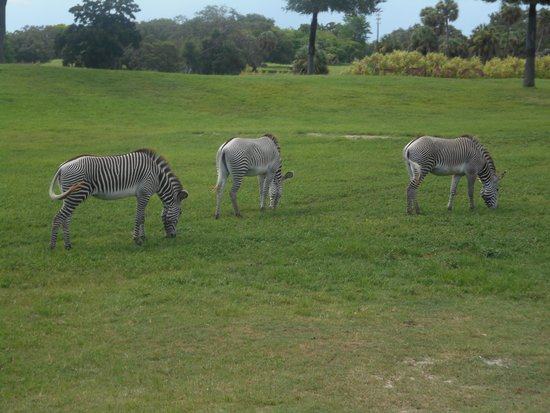 Jardines Busch: Safari