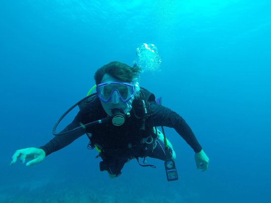 Cayman Marine Lab : CML Dive North Wall August 2014