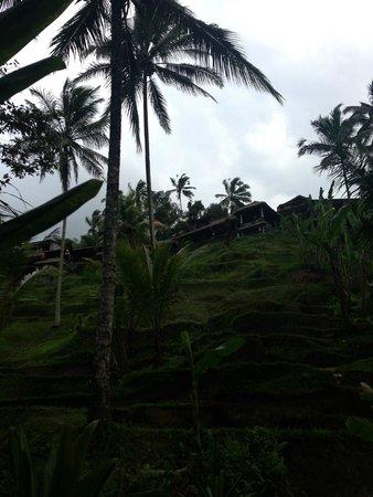 Bali Ginger Suites & Villa : Rice Terrace