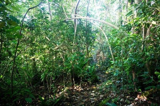Lower Sauma Ridge Hike: Part of the trail