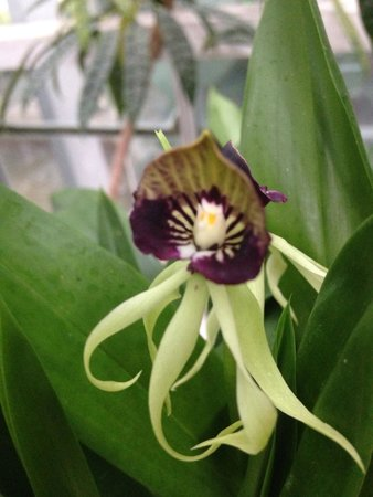 United States Botanic Garden : One of the many unique orchids.