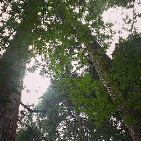 Mihara-mura, Japonia: 森林