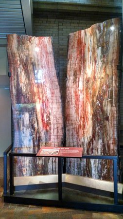 Denver Museum of Nature & Science: Petrified tree