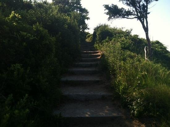Cornelia Carey Sanctuary (The Knob): path to the knob