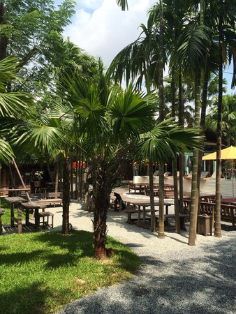 Paragon Inn: Looking out toward the pool and lobby. Grab a coconut and get some sun!