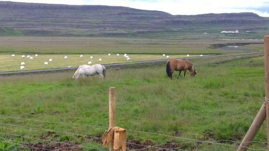 Hraunsnef Sveitahotel : Farm horses and the view from hotel