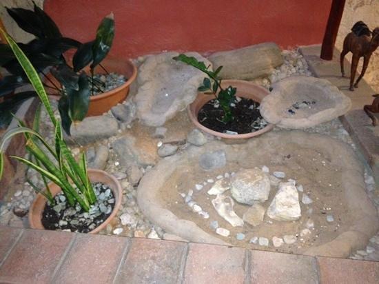 Down to Erth B &B : indoor garden!