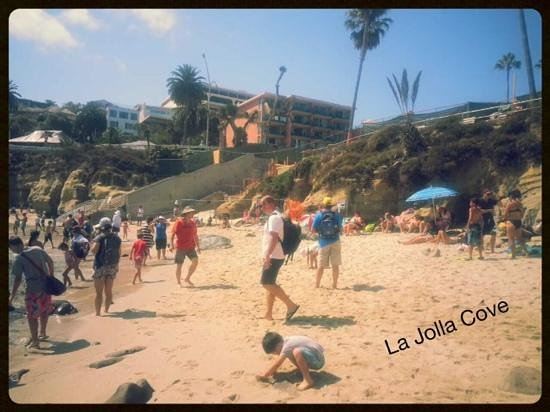 La Jolla Cove Suites: the cove and its small beach...the hotel in the distance....so close