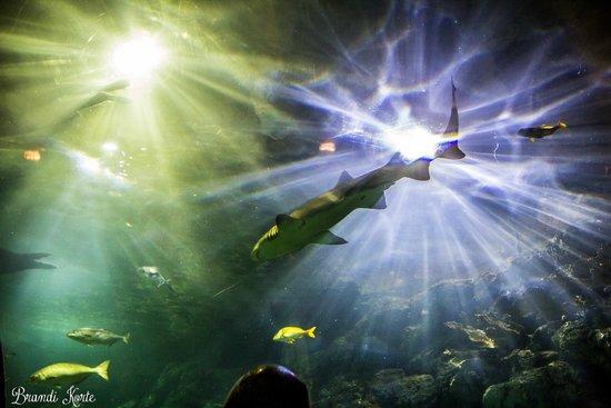 Moody Gardens: Aquarium shark tank