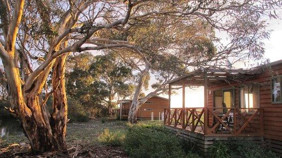 Seal Bay Cottages : Delux cabin at sunset