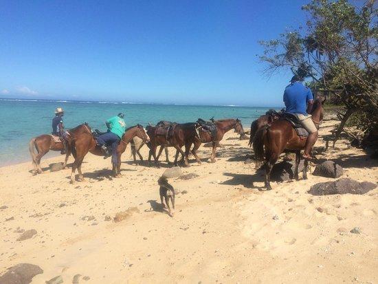Fiji Hideaway Resort & Spa: Horses