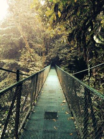 Parque Selvatura: Amazing View!
