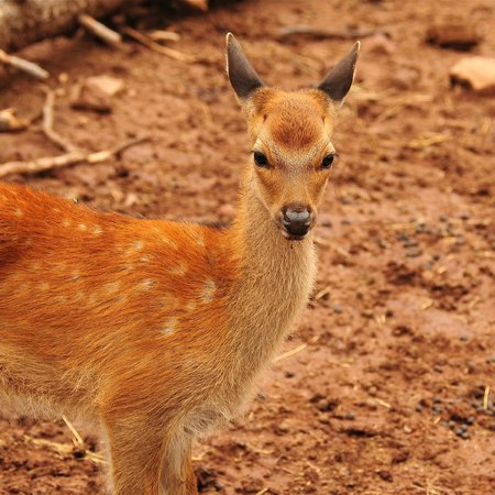 Grand Canyon Deer Farm: What's cuter than this little guy?
