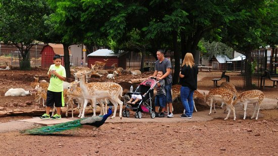 Grand Canyon Deer Farm: The deer were very friendly with families.