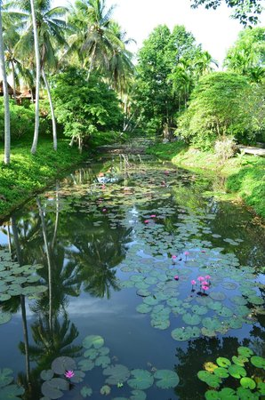 Lilawalai Resort: the water lillies