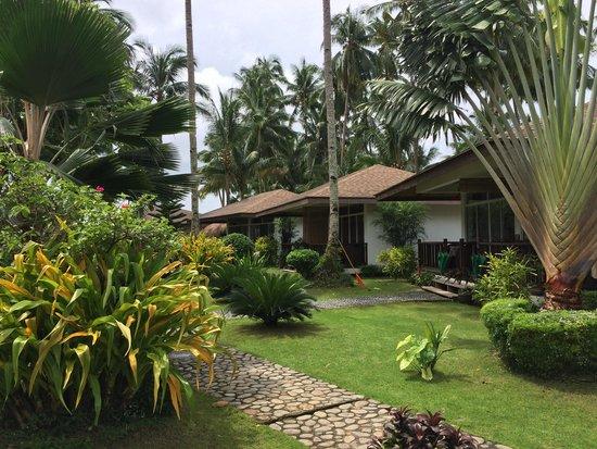 Cadlao Resort: View of the garden.