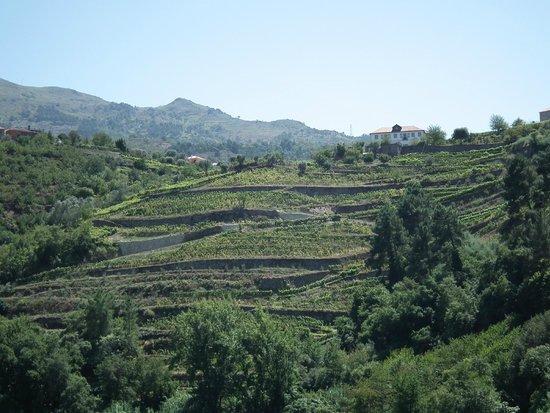 Rio Douro: les vignes