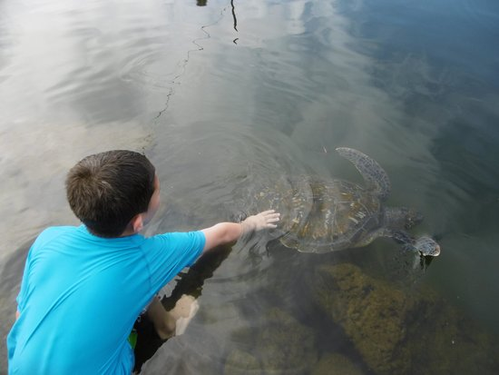 Swimming with Turtles: fabulous experience for the kids