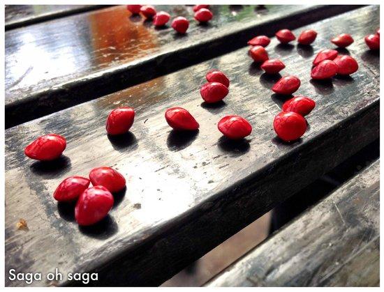 Basaga Holiday Residences: Saga seeds from the Saga Trees around Basaga