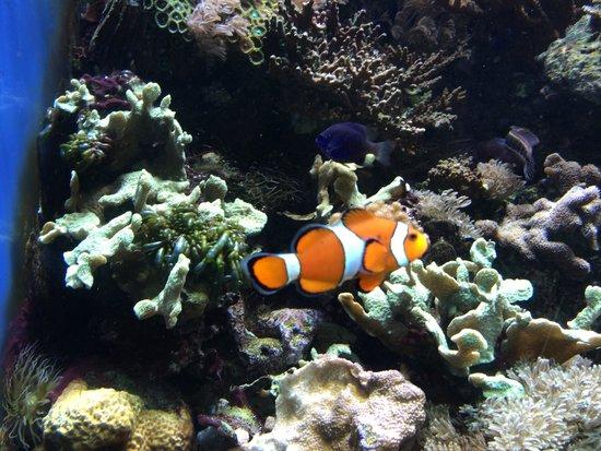 "ZSL London Zoo: ""Nemo"""