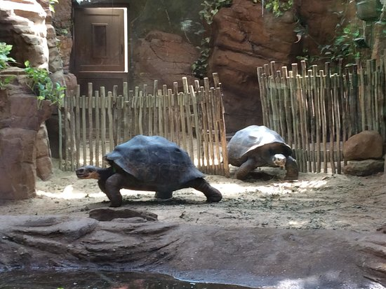 ZSL London Zoo: Giant turtles