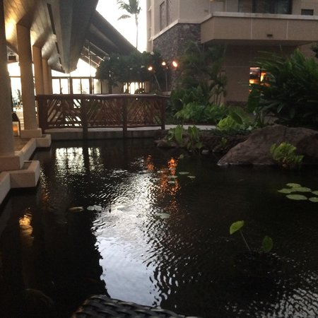Kapalua Resort : Koi pond