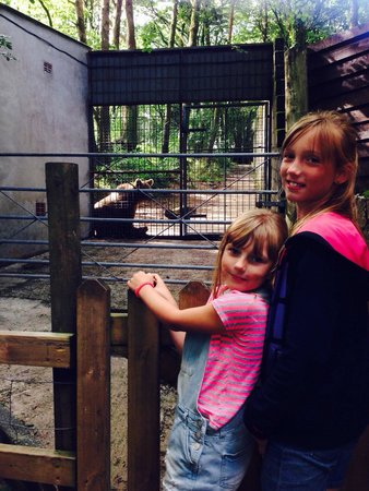 Dartmoor Zoological Park: Excited to see the bear
