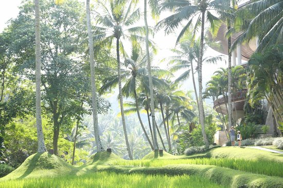 Four Seasons Resort Bali at Sayan : Grounds