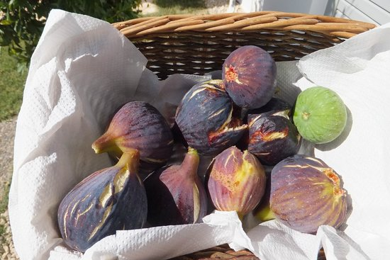 BanSala: Fresh figs!