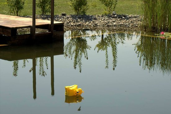 Valea Verde Resort: artifficial pond