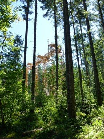 Lynn Canyon Park: Walk through the woods