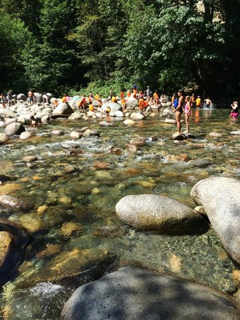 Lynn Canyon Park : Ice cold river that was very refreshing on a hot day