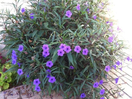 Nicki Holiday Resort Polis: Beautiful flowers were everywhere!