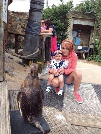 Living Coasts: Myself, baby & penguin.