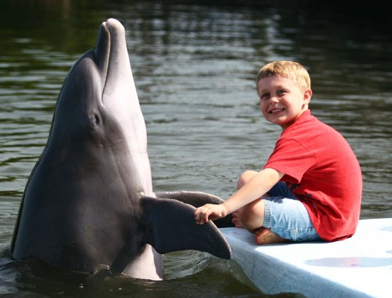Dolphin Research Center : My son interacting with a dolphin