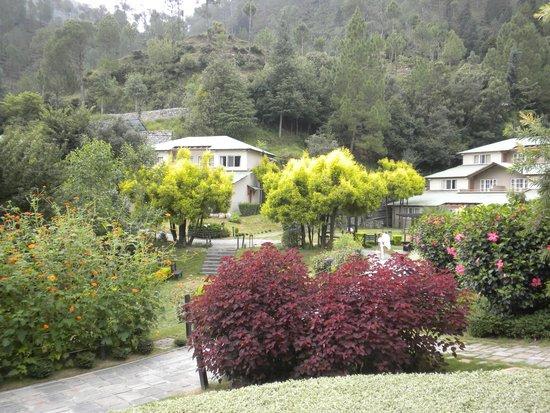 Club Mahindra Binsar Valley: View from my Room