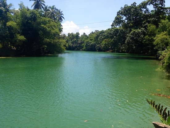 Fox & The Firefly Cottages : The Loboc River