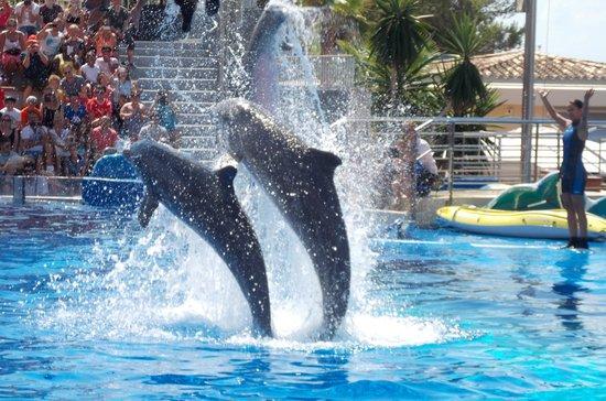 Club MAC Alcudia: dolphin show
