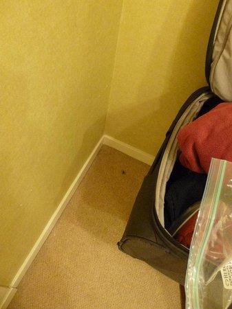 Ardvasar Hotel: Spider bedroom carpet