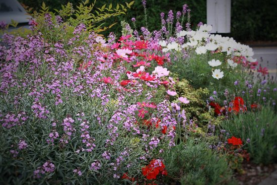 The Rowbarge: Beautiful flowers line the property