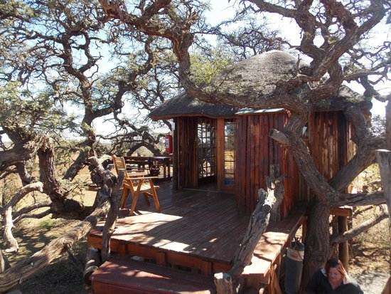 Northern Cape, Zuid-Afrika: Tree House at Mokala
